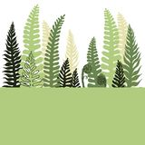 Background with hand drawn fern.   Vector sketch illustration Stock Images