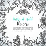 Background with Hand drawn herbs and wild flowers Vintage collection of Plants Floral invitation Vector illustrations in. Sketch style stock illustration