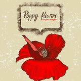 Background with hand drawn poppy flower Stock Photography