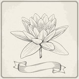 Background with hand drawn sketch beautiful water Lily flower. Royalty Free Stock Image