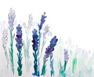 Background with hand painted watercolor lavender Stock Images