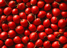 Background of haws gathered Royalty Free Stock Photos