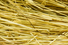 Background from hay Stock Photography