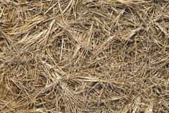 Background of the hay Stock Photos