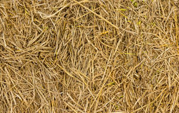 Background of hay and dry grass Royalty Free Stock Photography