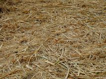 Hay ground in light brown color stock photography