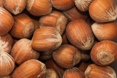 Background of hazelnuts Stock Photography
