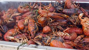 Bunch red boiled crayfish with spices. Background heap of red boiled crayfish with spices Royalty Free Stock Photography