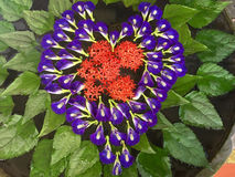 Background of heart shaped flowers. Amazing  heart laid on the w Royalty Free Stock Photography