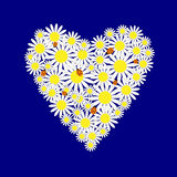 Background with hearts of the daisies Stock Image