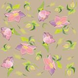 Background. Hellebore. Royalty Free Stock Photography