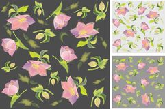 Background. Hellebore. Stock Photos