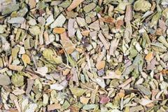 Thyme, close- up stock photos