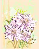 Background with herberas Royalty Free Stock Image