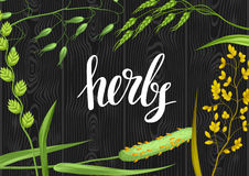 Background with herbs and cereal grass. Floral design of meadow plants Stock Photos