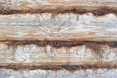 Background of hewn logs. And insulation Stock Photography