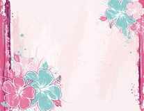 Background with hibiscus, vect Stock Photos