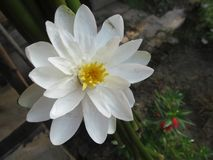 White beautiful flower royalty free stock images