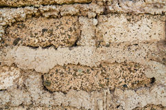 Background of home soil wall. Stock Photos
