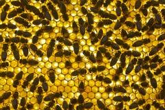 Background honeycomb Stock Photography