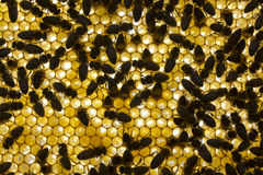 Background honeycomb Royalty Free Stock Photography