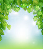 Background with hops royalty free illustration