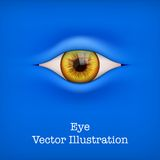 Background with human eye. Vector Illustration. Stock Photography
