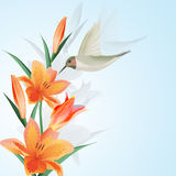 Background with humming bird . Background with humming bird and flowers Royalty Free Stock Image