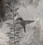 Background with the hummingbird Stock Photography