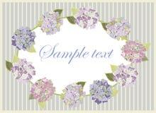Background. Hydrangea. Royalty Free Stock Image