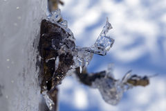 Background.Icicles unusual shape after the thaw. Stock Photography