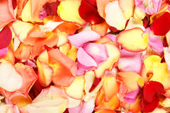 Background image of beautiful bright fallen petals Stock Images