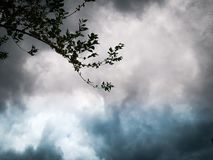 Background image, beautiful colored clouds and twig stock photo