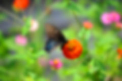 Background Image of Butterfly on Flowers Stock Photos