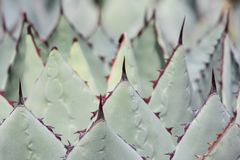 Close up of a cactus royalty free stock image