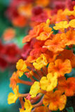 The background image of the colorful flowers Stock Image