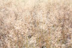 Background image of dry brown grass on a field Royalty Free Stock Photography
