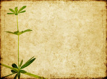 Background image with earthy texture Stock Image