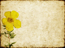 Background image with earthy texture. Lovely background image with interesting earthy texture. useful design element Stock Image