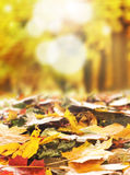 Background image with fallen autumn leaves Royalty Free Stock Photography