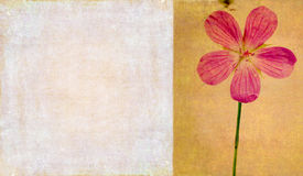 Background image with floral elements. Lovely background image with floral elements and earthy texture Stock Photography