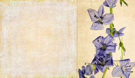 Background image with floral elements Stock Photos