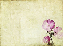 Background image with floral elements Stock Image