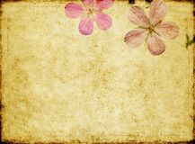 Background image with floral elements Stock Photo