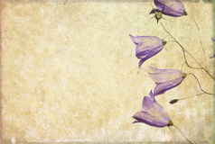 Background image with floral elements Stock Images