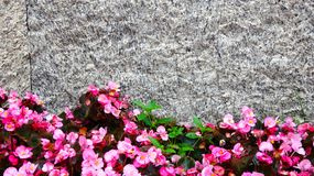 Background picture of flowers and texture stock images