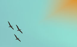 Background image of flying albatross Royalty Free Stock Photography