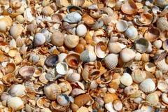 Sea shells as background. royalty free stock photos