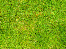 Background image of a grass field Royalty Free Stock Images