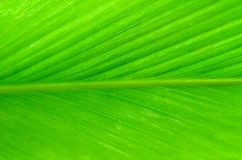 Background image of a large green leaf Royalty Free Stock Photo